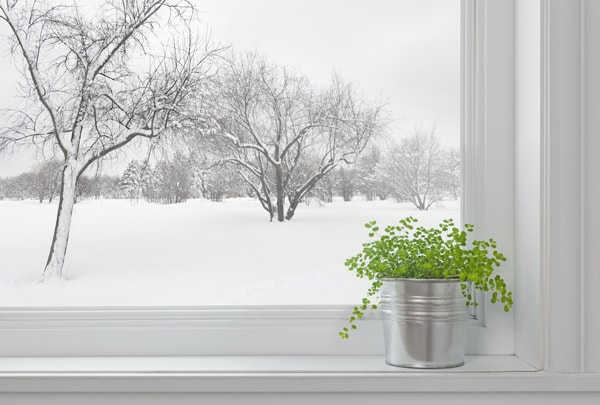 Winter landscape seen through the window, and green plant, why is my heat pump freezing up